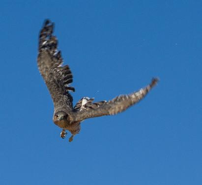 cooper adult flight