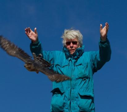 Me Releasing a Cooper Hawk