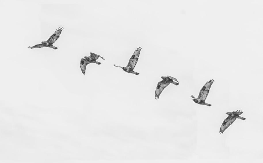 flight roughie2 bw