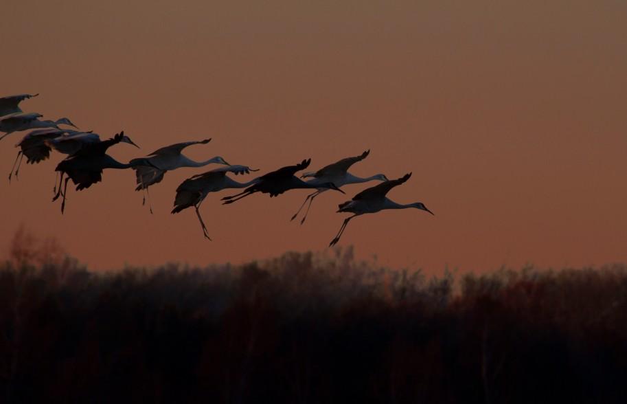 cranes in air