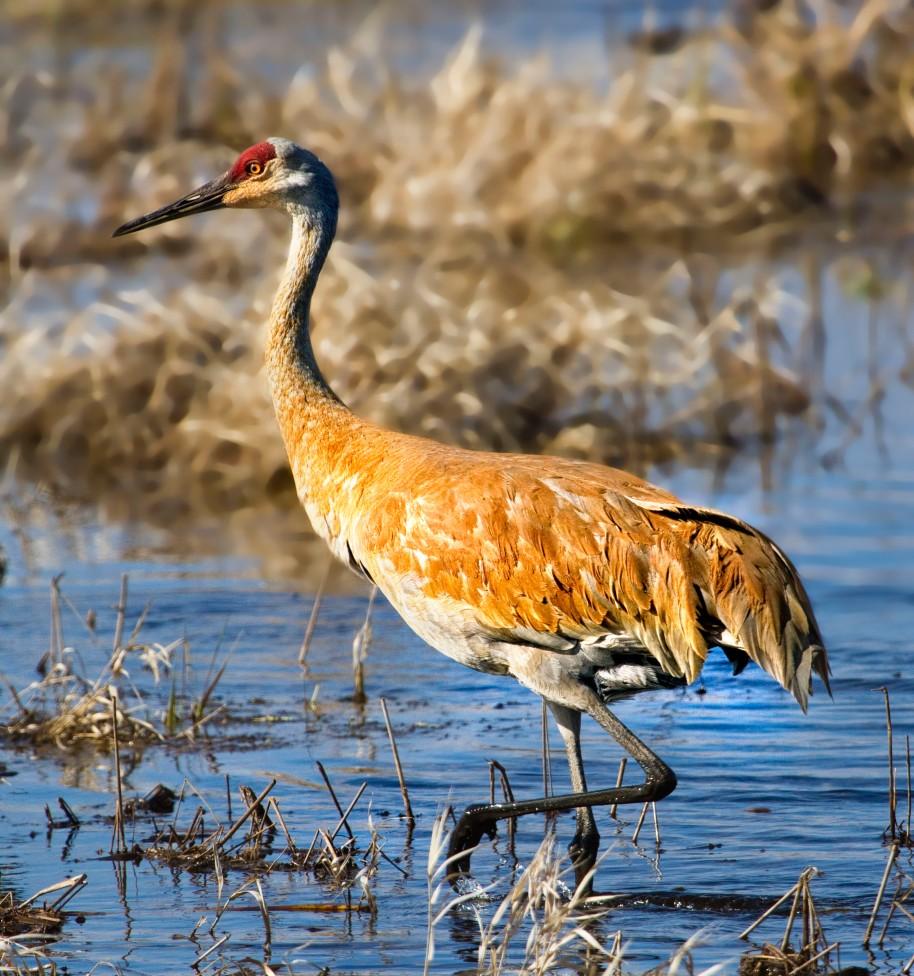 march crane