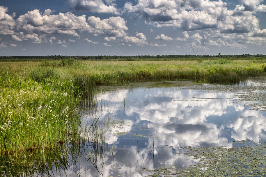 crex reflections2