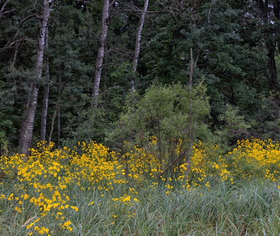 crex woods