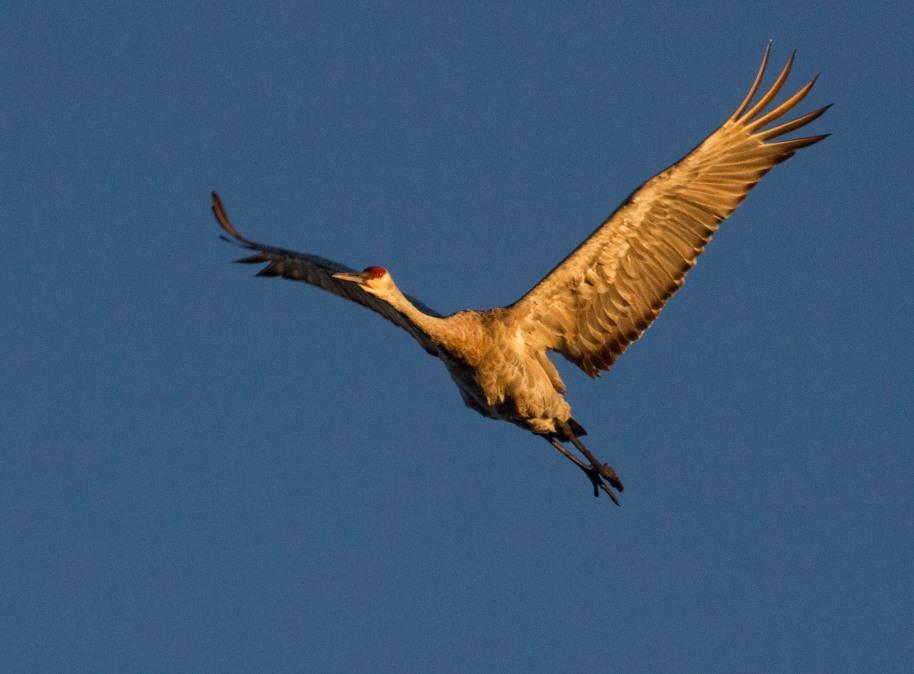 flying crane2
