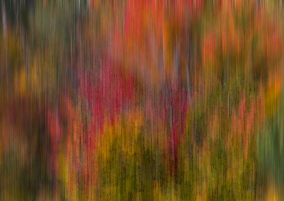 neon woods2