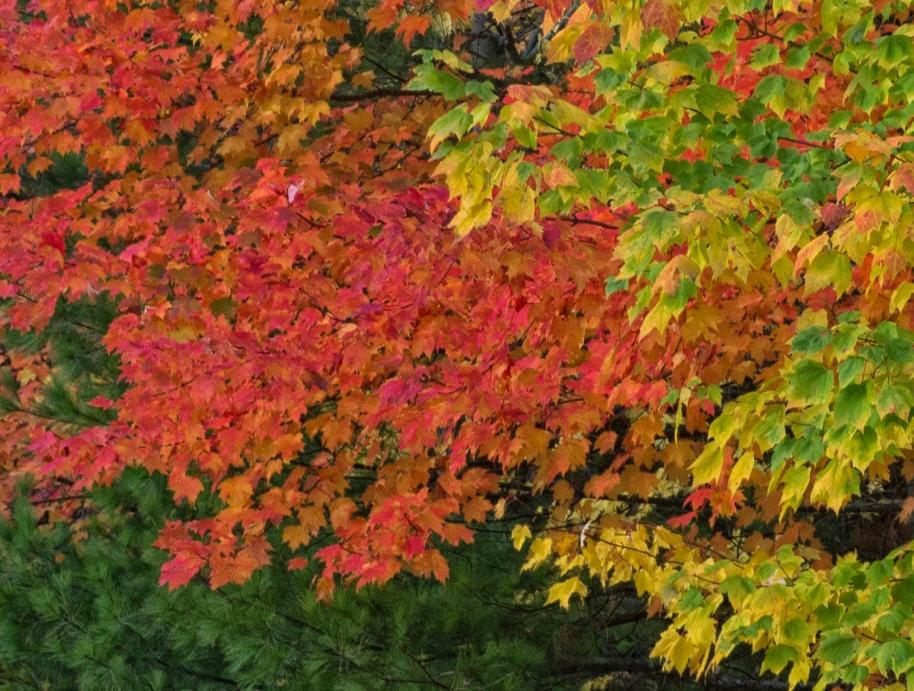 fall foliage44