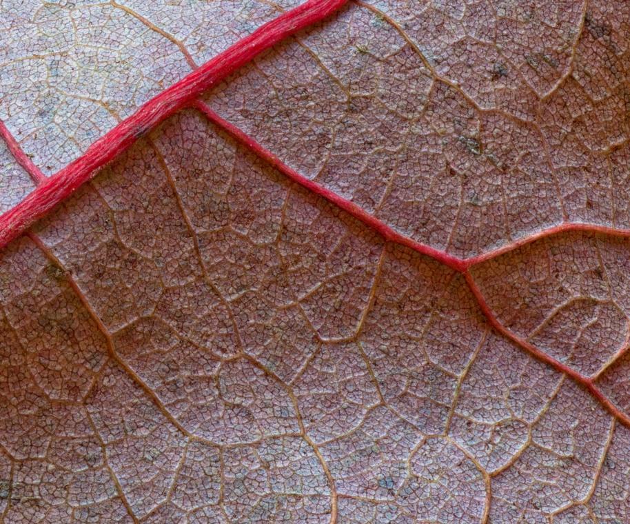 leaf macro 20 med