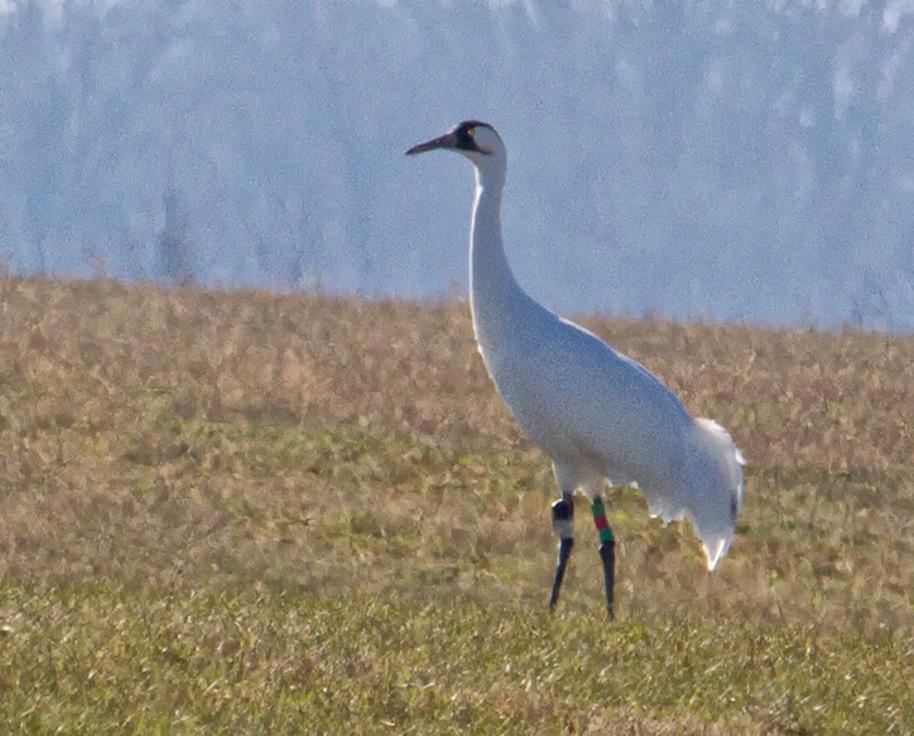 walking crane