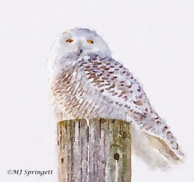 snow owl water final