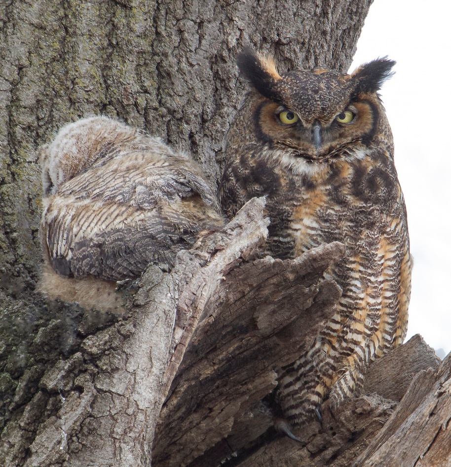 under the watchful eye