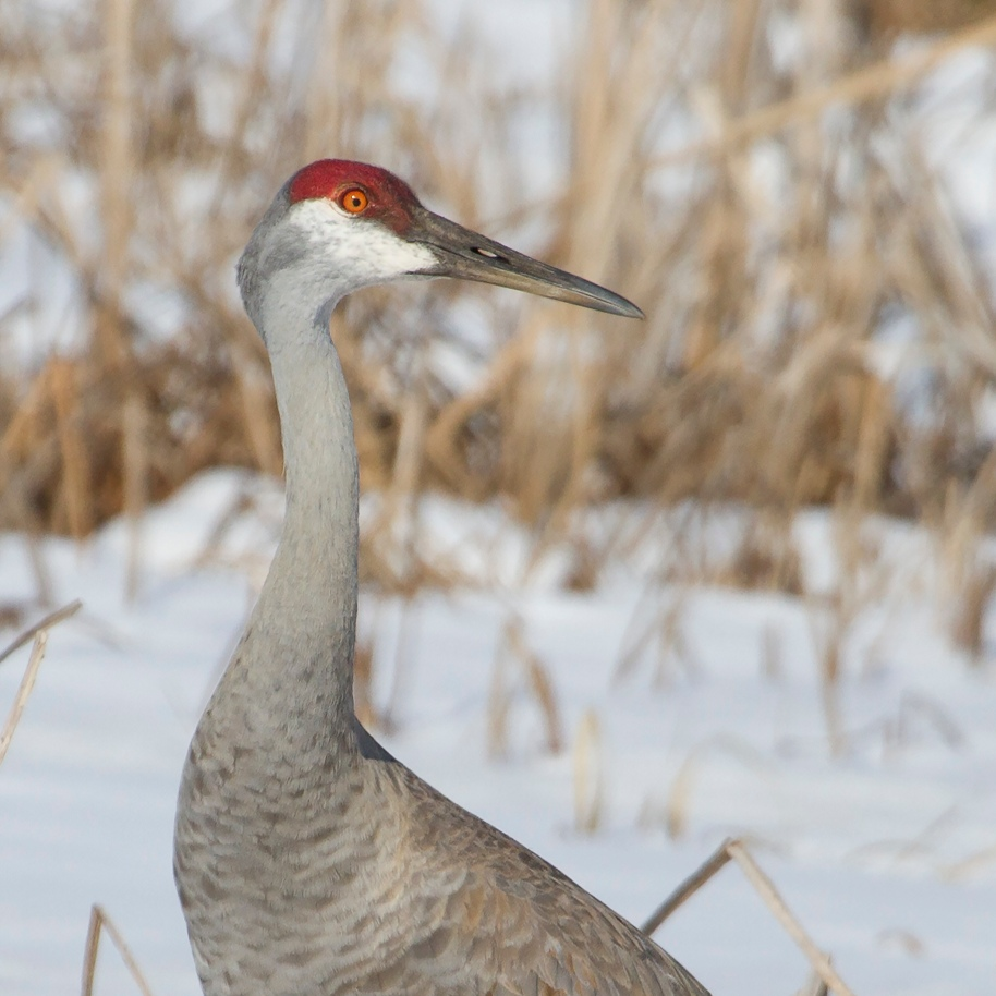 spring crane4