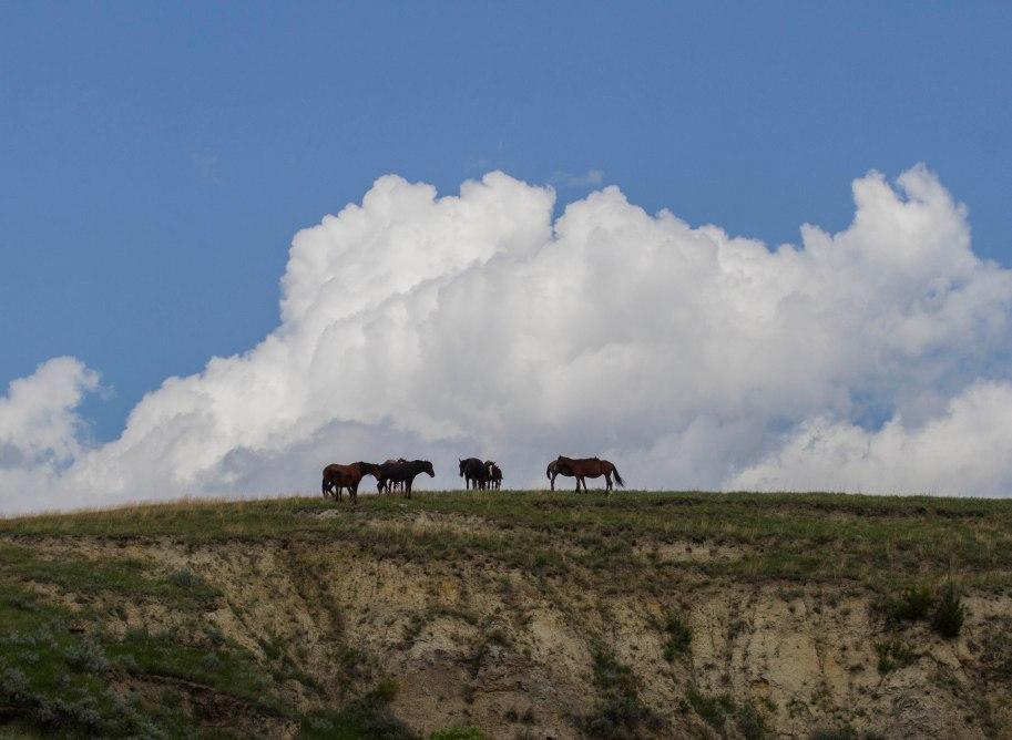 thunderhead horses