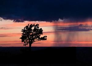 final crop sunset