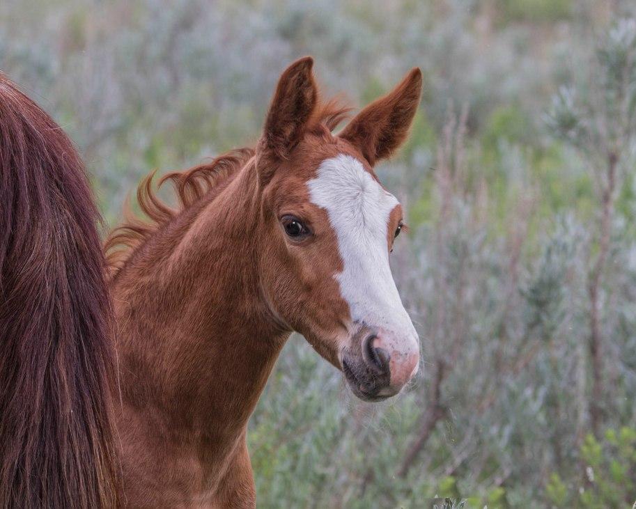 shy foal
