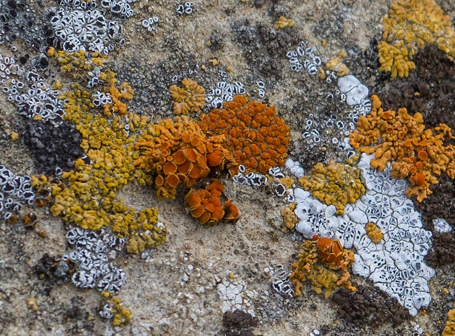 badlands lichens