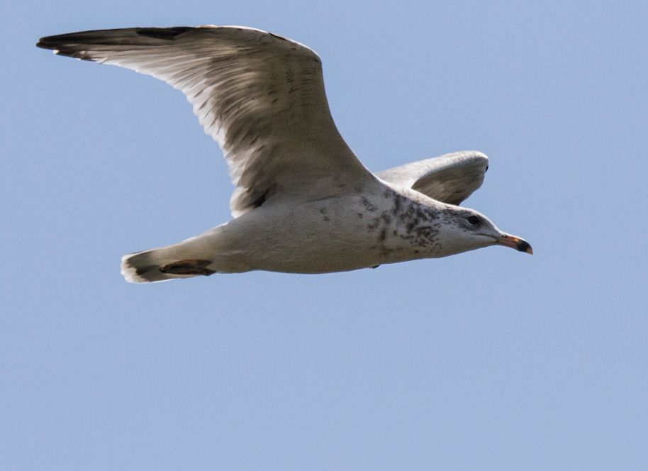 seagull test1