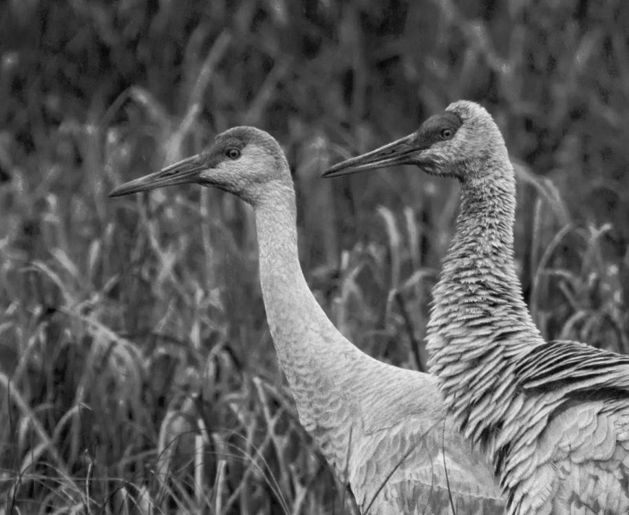 bw cranes comparison