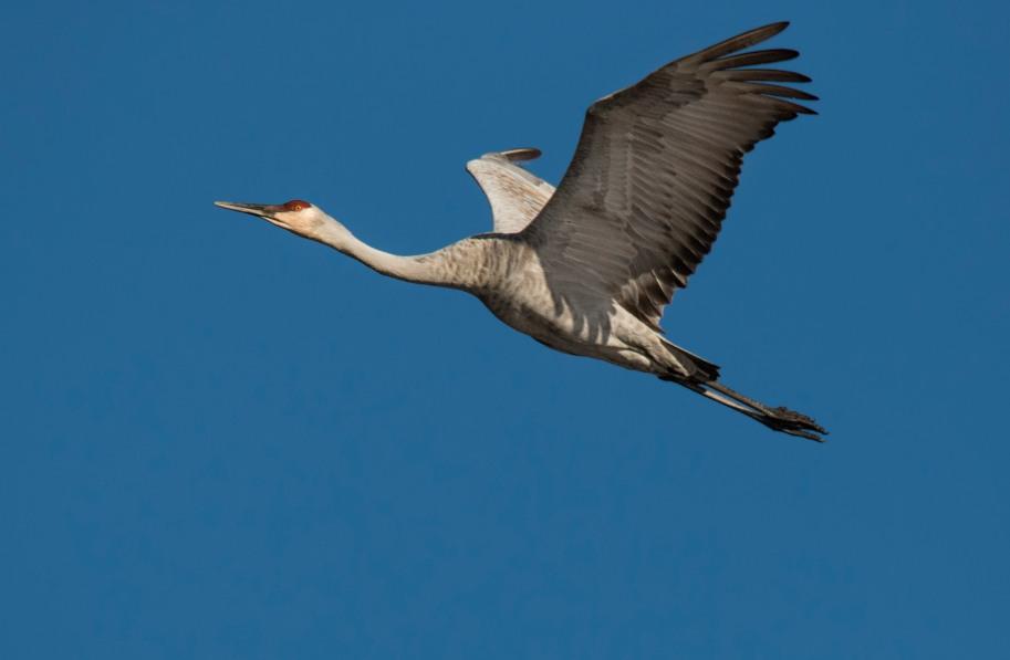 crane daytime flight