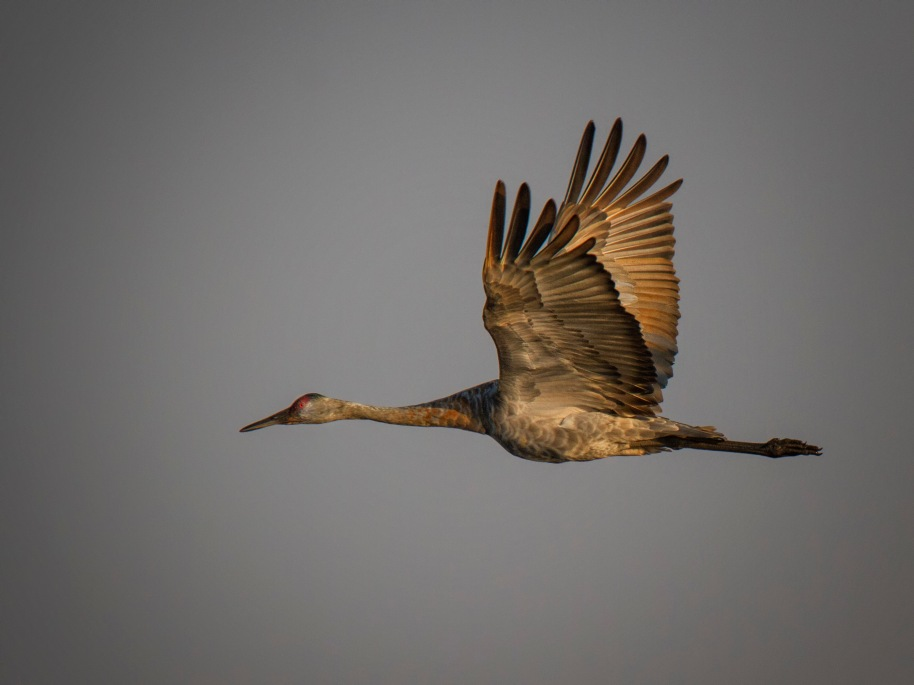 crane flight1