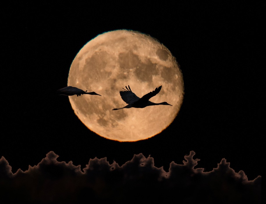 cranes on the moon