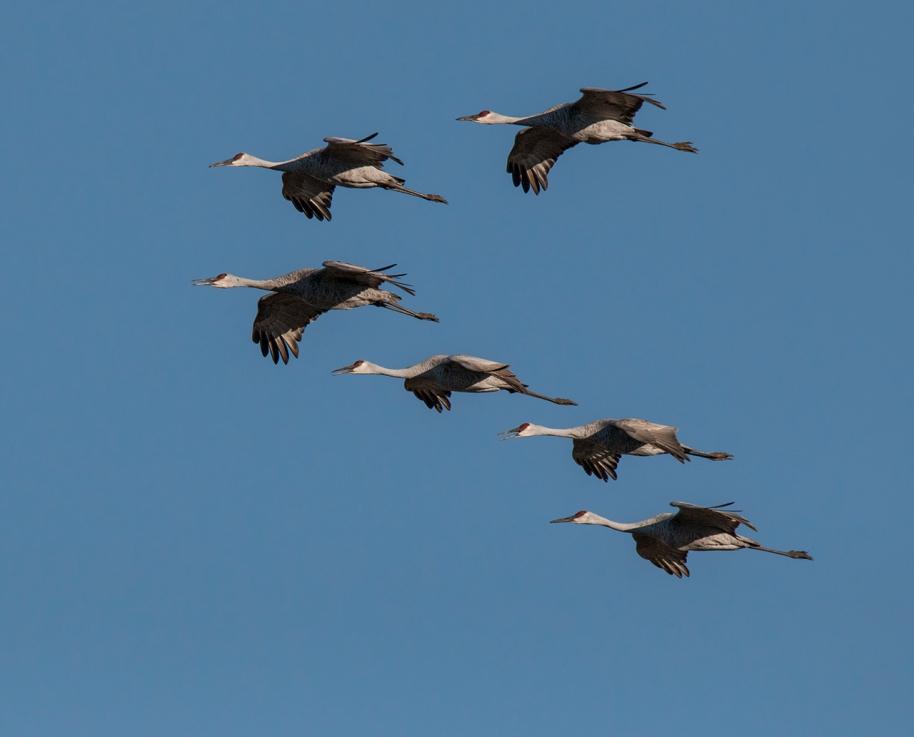 cranes tight v