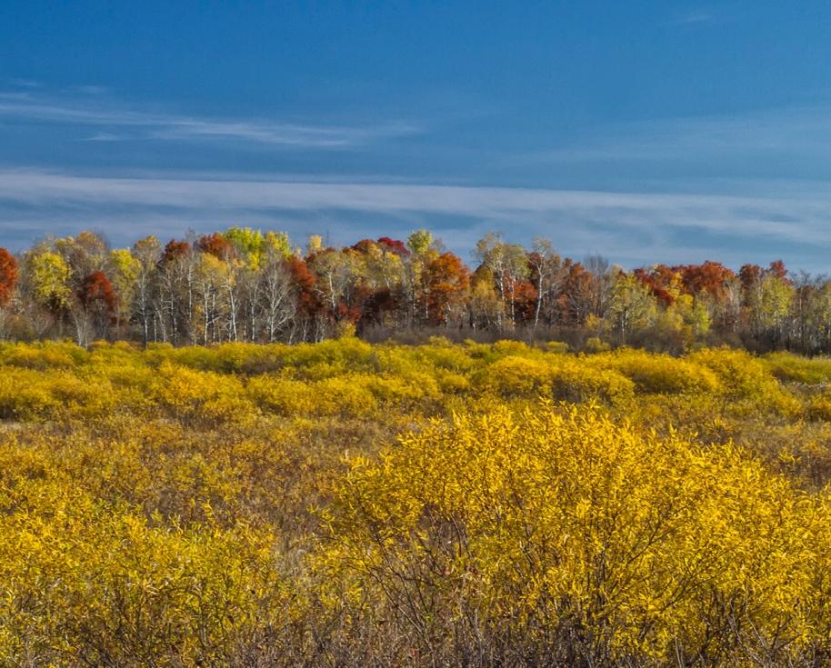 fall foliage23