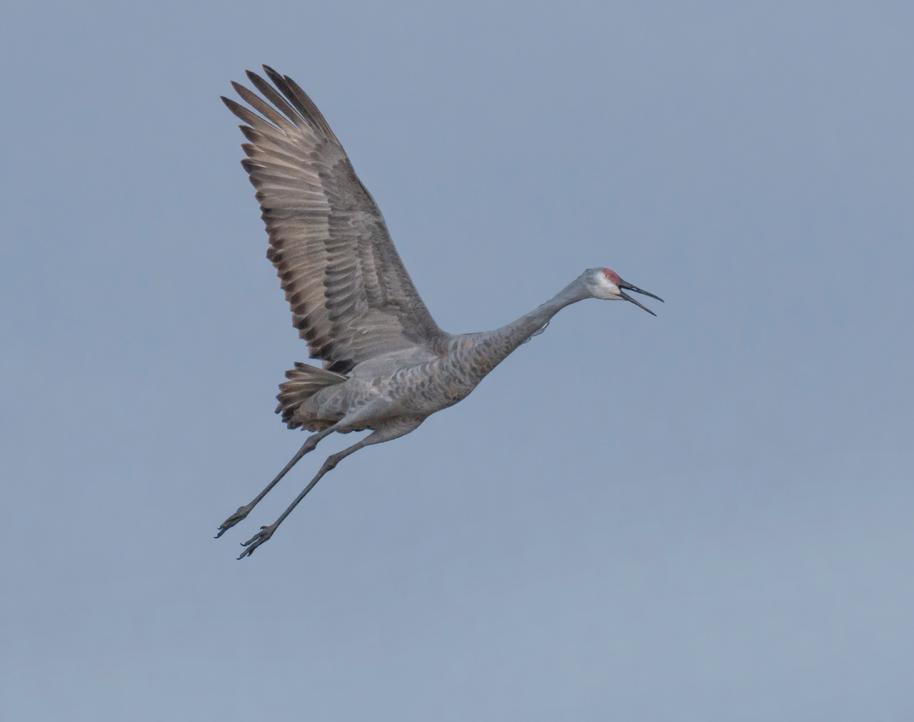 crane single