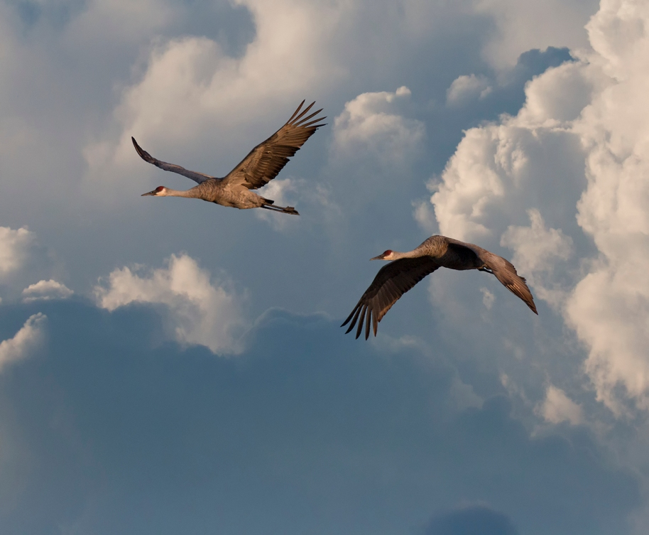 cranes and clouds