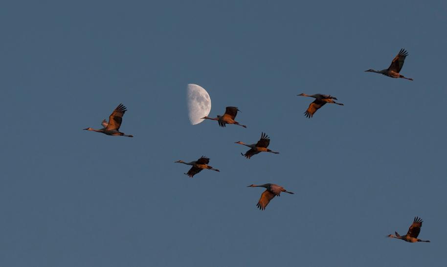 moon v cranes