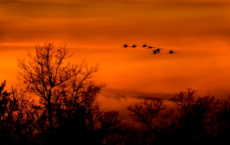 sunset cranes22