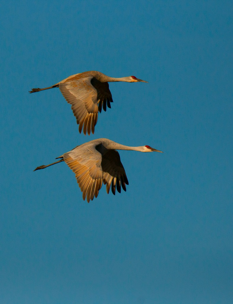 1-two-crane-flight