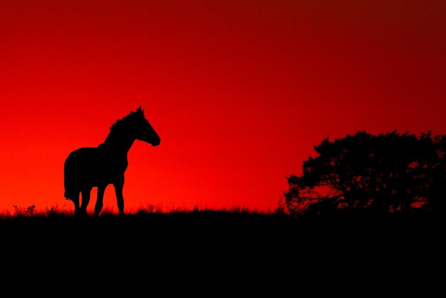 sunset-horse