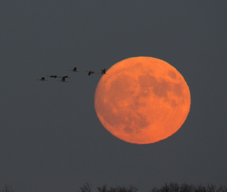 cranes-on-the-moon2