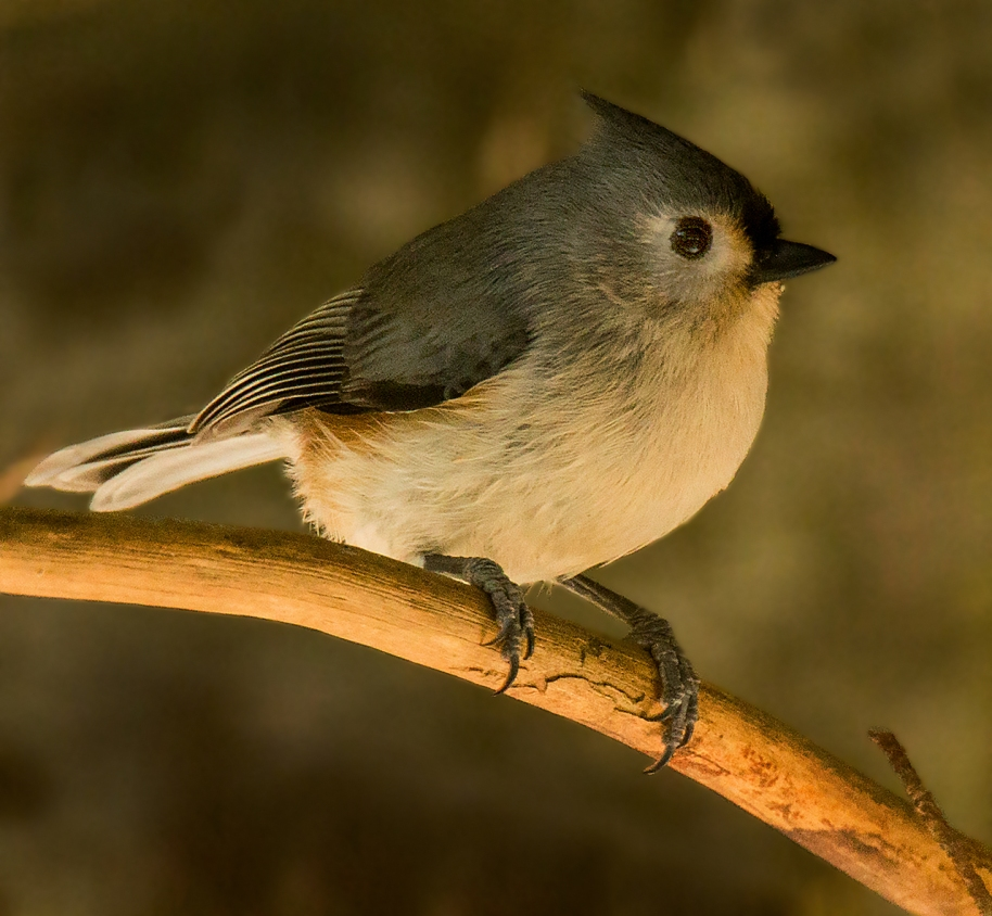 takeoff-titmouse